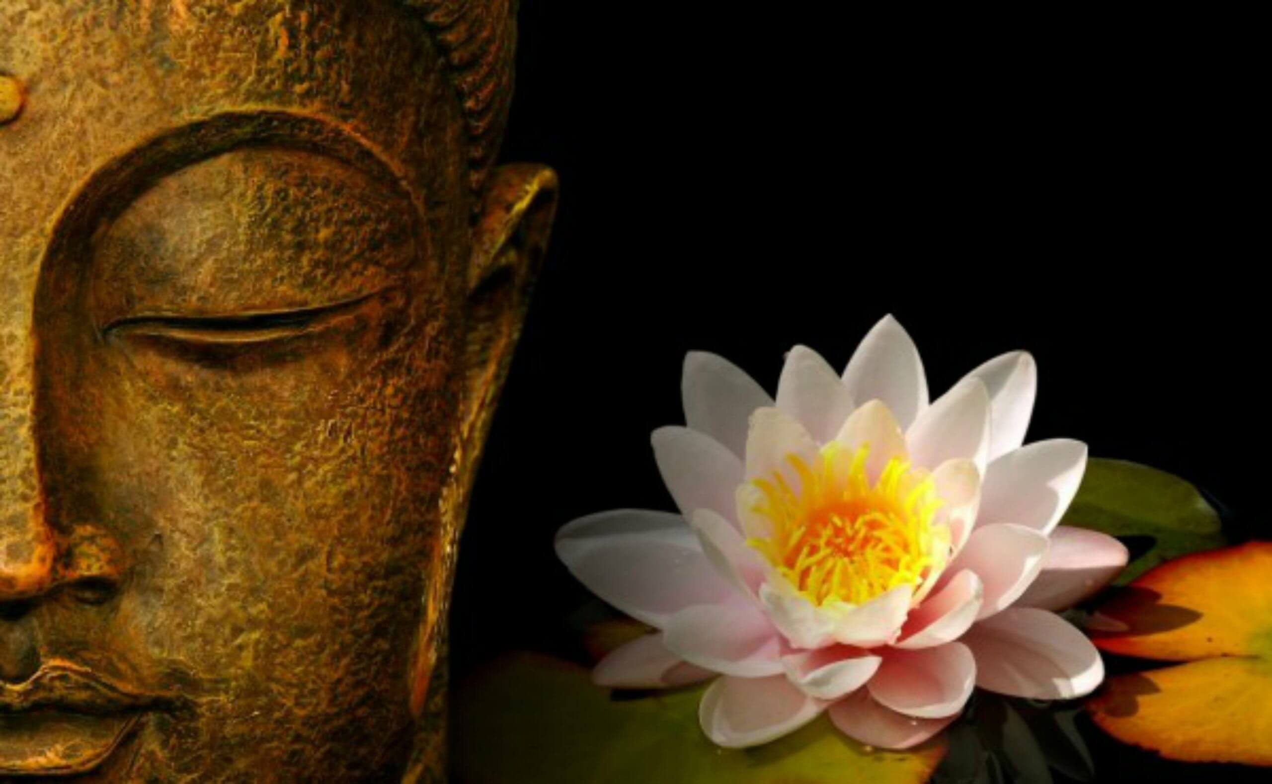 Lessons From The Lotus Flower Untethered